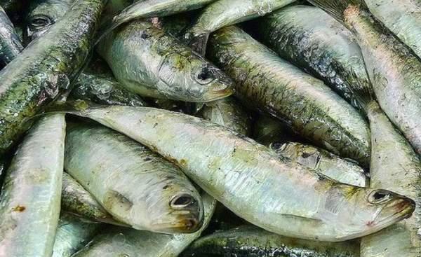 New_pesca-001