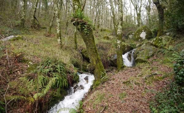 área de ribeira e fervenzas do rego Bouzós