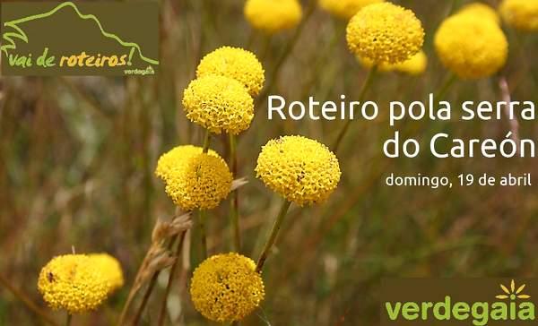 Santolina_melidensis_2_copia