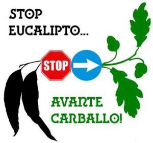Stop-Eucalipto